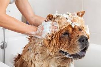 How Often Should You Bathe a Dog