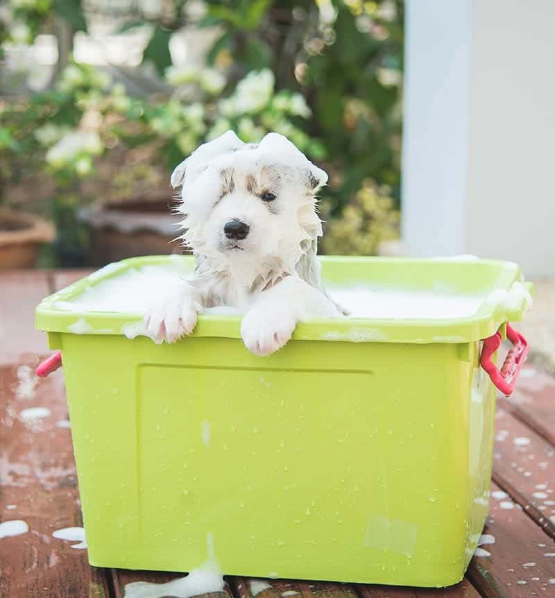 puppy bath outside