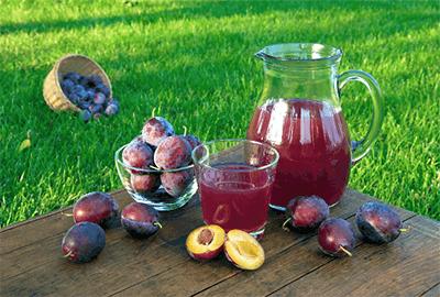 can dogs eat prune juice