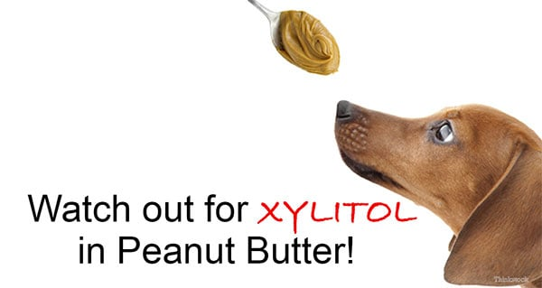 xylito can seriously harm or kill your dog